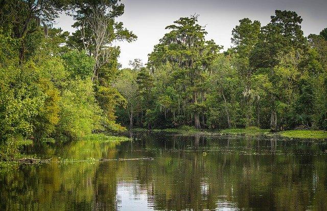 photo of bayou
