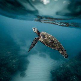 Baby turtle breaking free