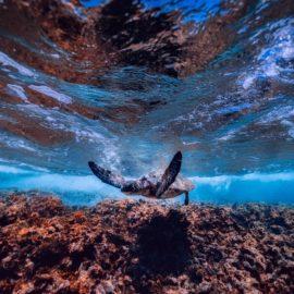 Sea Turtle close to the bottom