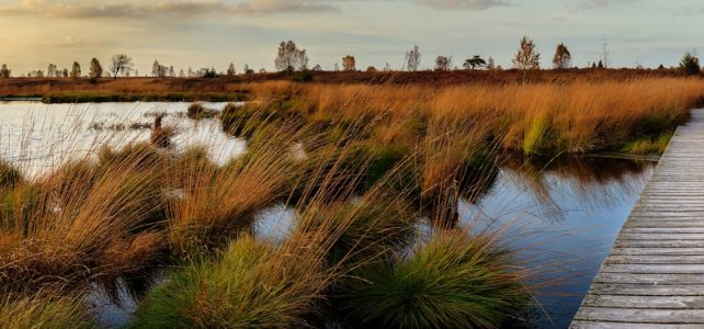 Mid-Barataria Diversion builds marshes