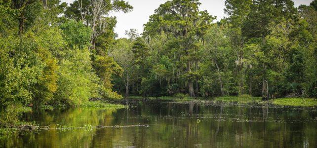 Louisiana Marsh