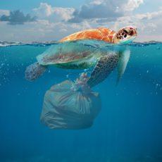 House Committee Hard on Plastic