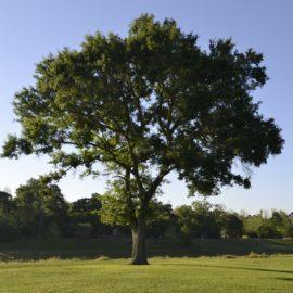 Tree in clean air