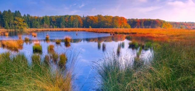 Pretty Marsh