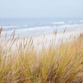 Beach with sea grass