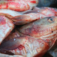 Asian Carp to be renamed?