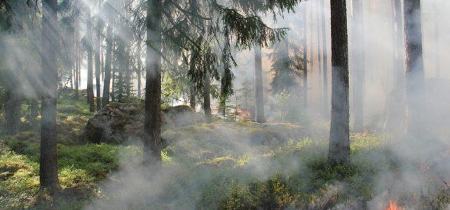 Fire in trees