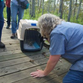 Saved bird released